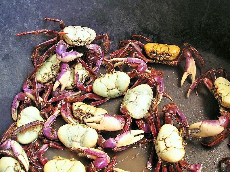 Nieuw Nickerie - markt - krab te koop