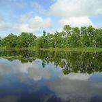 Suriname - Matapica kreek
