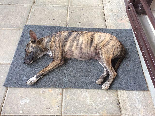 Sky Radio - Appartement - Hond - asfaltgrijs