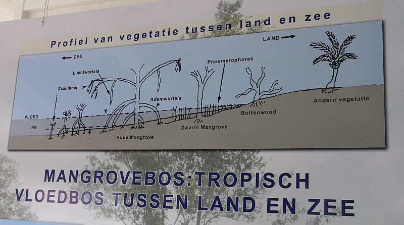 Coroni - Mangrove poster