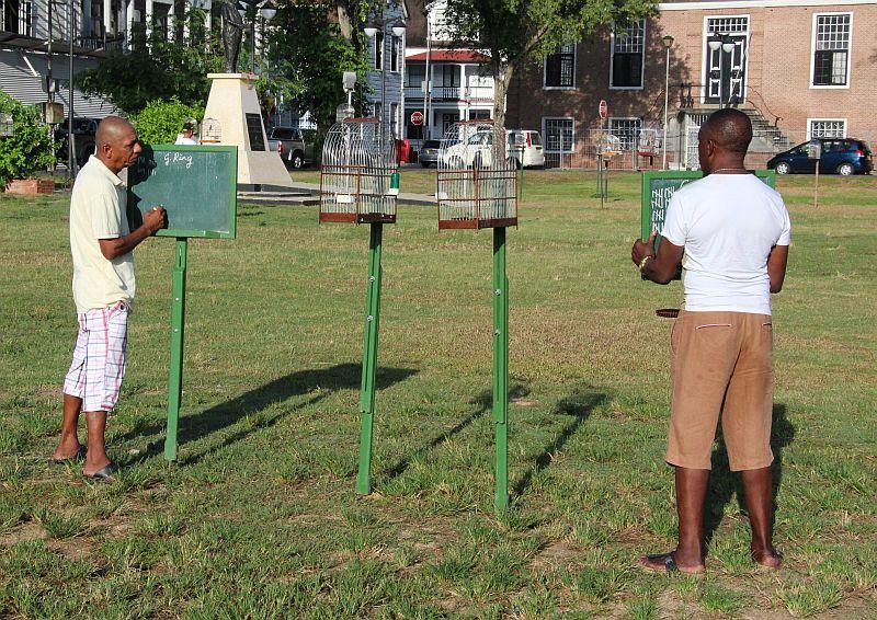Paramaribo - Vogelzang - Twee vogels in competitie