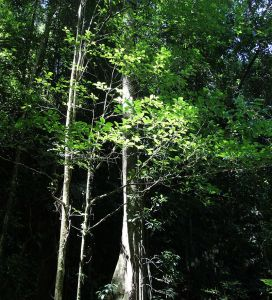 Brownsberg - Leoval -Zon belicht overzijde