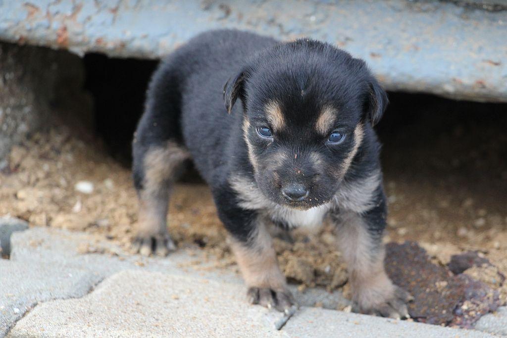 Jong van de bruin zwarte grote hond - 4 december