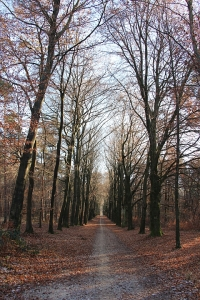 Nijmegen - Heumensoord - Bospad in de herfst