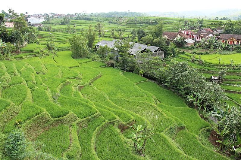 Uitkijkpunt rijstvelden