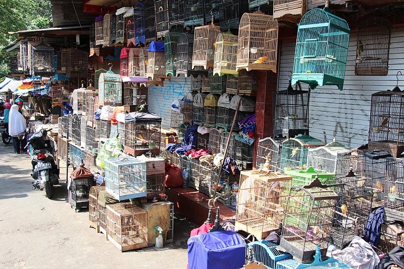Malang - Vogeltjesmarkt