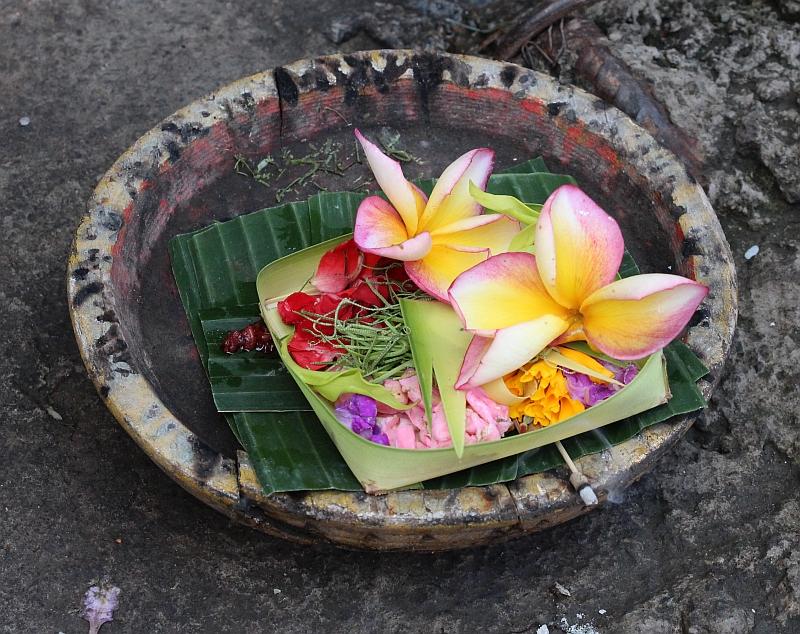 Bali - Ubud - Dagelijkse offers